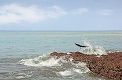 Pájaro de vuelo en la fractura de olas oceánicas Imágenes de archivo libres de regalías