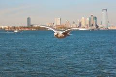Pájaro de vuelo sobre el mar en Manhattan Fotos de archivo libres de regalías