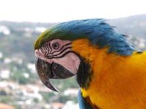 Pájaro del arauna del Ara del Macaw exótico foto de archivo