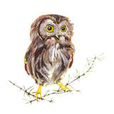 Pájaro del búho Imagen de archivo