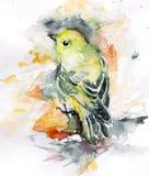 Pájaro del color Imagen de archivo libre de regalías