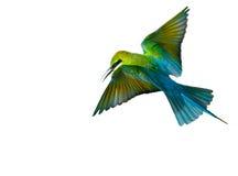 Pájaro del comedor de abeja Imagen de archivo