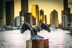 Pájaro del Darter en trozo en puerto imagen de archivo