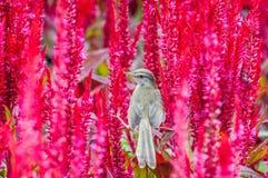 Pájaro del gorrión en natural Fotografía de archivo libre de regalías