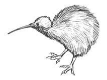 Pájaro del kiwi, símbolo de Nueva Zelanda stock de ilustración