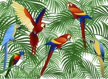 Pájaro del loro Fotos de archivo libres de regalías