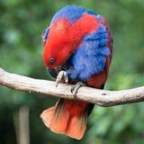 Pájaro del loro Fotografía de archivo libre de regalías