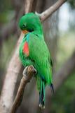 Pájaro del loro Imagen de archivo