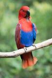 Pájaro del loro Foto de archivo