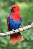 Pájaro del loro Imagen de archivo libre de regalías
