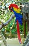 Pájaro del loro del Macaw Imágenes de archivo libres de regalías
