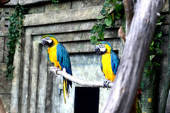Pájaro del loro que se sienta en la rama Foto de archivo libre de regalías