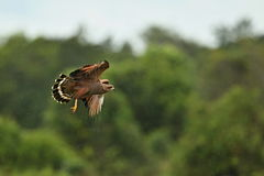 Pájaro del pantanal en el hábitat de la naturaleza Imagen de archivo libre de regalías