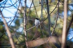 Pájaro del paro Foto de archivo