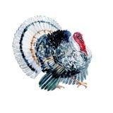 Pájaro del pavo de la acuarela aislado Imágenes de archivo libres de regalías