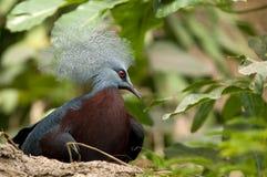 Pájaro del penacho Fotos de archivo