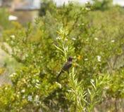 Pájaro del ratón de Peckled, pareciendo derecho, en la planta verde Imágenes de archivo libres de regalías