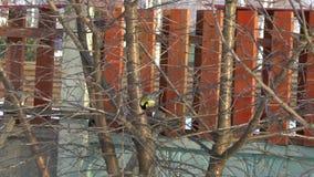 Pájaro del Tit en el árbol metrajes