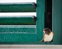 Pájaro del trago que se sienta en ventana Imagenes de archivo