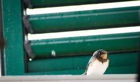 Pájaro del trago que se sienta en ventana Imagen de archivo