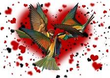 Pájaro del triángulo de amor contra la perspectiva de los corazones Fotografía de archivo libre de regalías