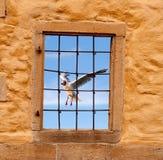 Pájaro detrás de las barras 2 de la ventana y de metal Fotos de archivo