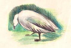 Pájaro Dibujado con los lápices coloreados Fotos de archivo