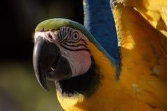 Pájaro divertido Imagen de archivo libre de regalías