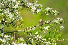 Pájaro el la primavera fotos de archivo