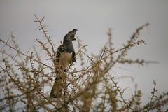Pájaro en África Fotografía de archivo libre de regalías