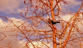 Pájaro en árbol Fotos de archivo