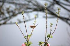 Pájaro en árbol Imágenes de archivo libres de regalías