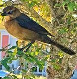 Pájaro en árbol Imagenes de archivo