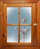 Pájaro en árbol en nevadas fuera de la ventana Imagen de archivo libre de regalías