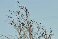 Pájaro en árbol seco Imagenes de archivo