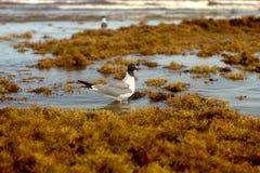Pájaro en agua Fotos de archivo