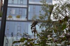 Pájaro en algunos árboles Fotografía de archivo libre de regalías