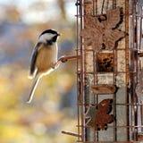 Pájaro en alimentador Foto de archivo