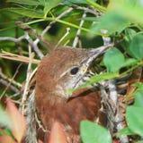 Pájaro en Bush Imagenes de archivo