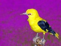 Pájaro en cambio Imagen de archivo libre de regalías