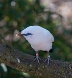Pájaro en Chester Zoo, Cheshire Fotografía de archivo