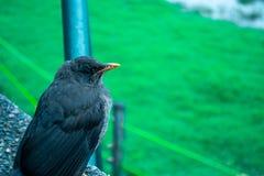 Pájaro en día frío que ve el paisaje imagenes de archivo