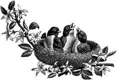 Pájaro en diversos colores ilustración del vector