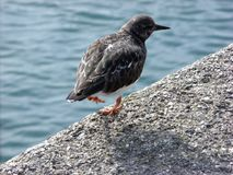 Pájaro en The Edge Imágenes de archivo libres de regalías