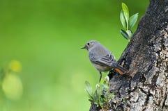 Pájaro en el árbol Foto de archivo libre de regalías