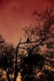 Pájaro en el árbol Foto de archivo