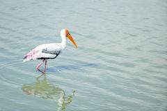 Pájaro en el agua Fotos de archivo libres de regalías
