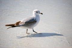 Pájaro en el agua Foto de archivo libre de regalías
