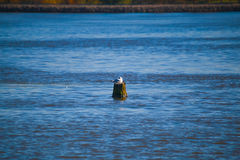 Pájaro en el agua Fotos de archivo