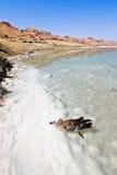 Pájaro en el agua del mar muerto Imágenes de archivo libres de regalías